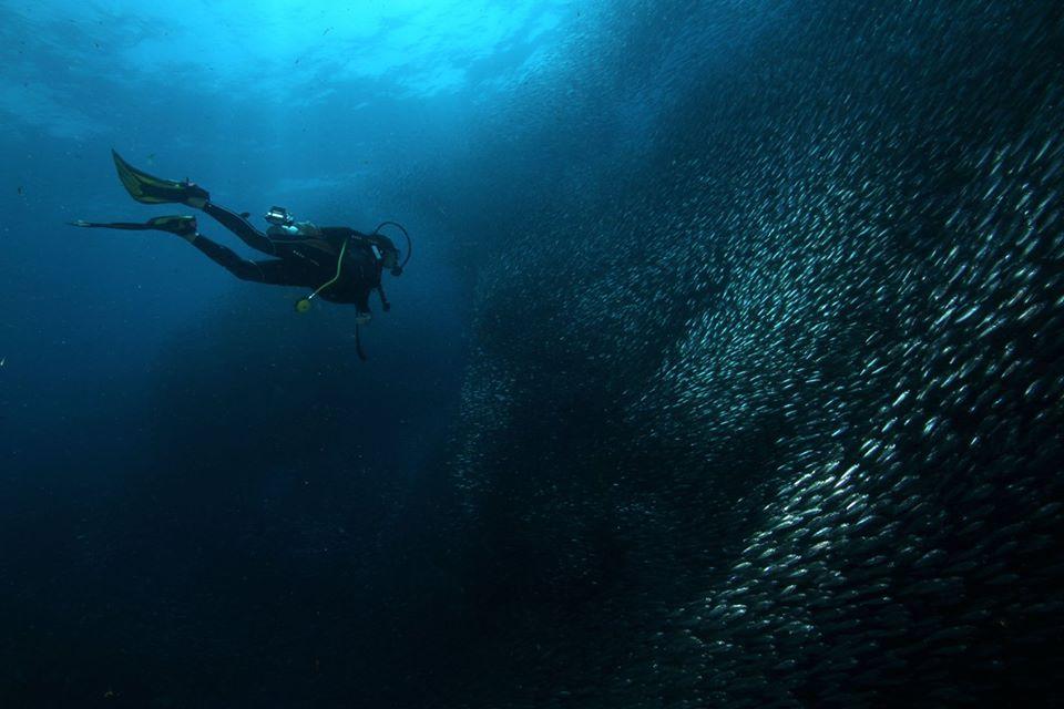 moalboal-sardine-rund-11
