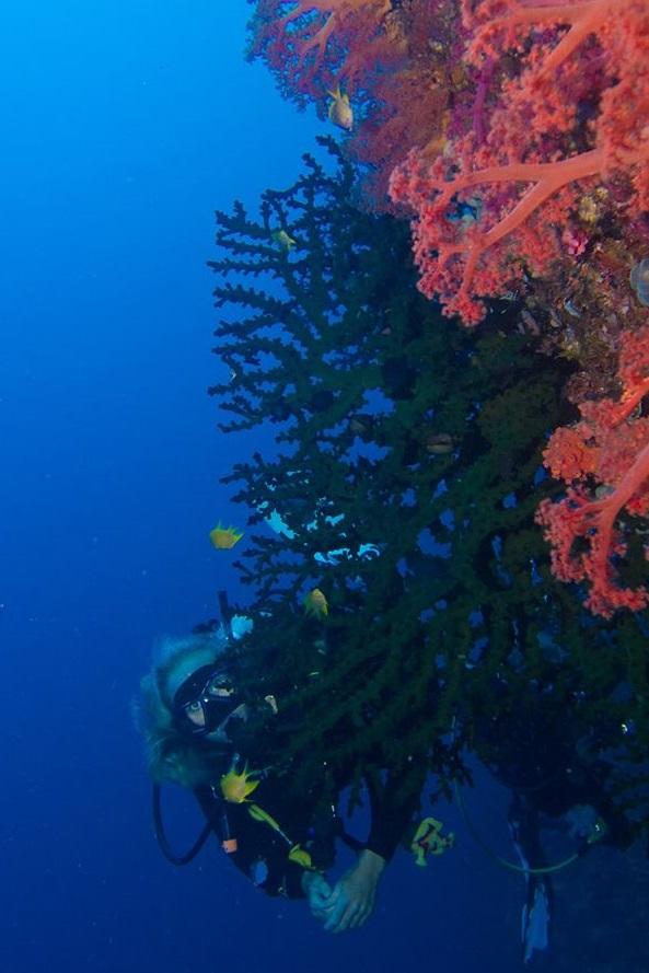 sof corals