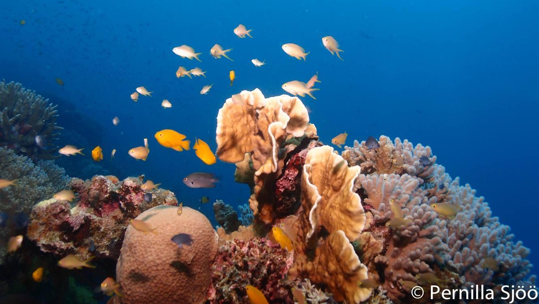 Corals overload