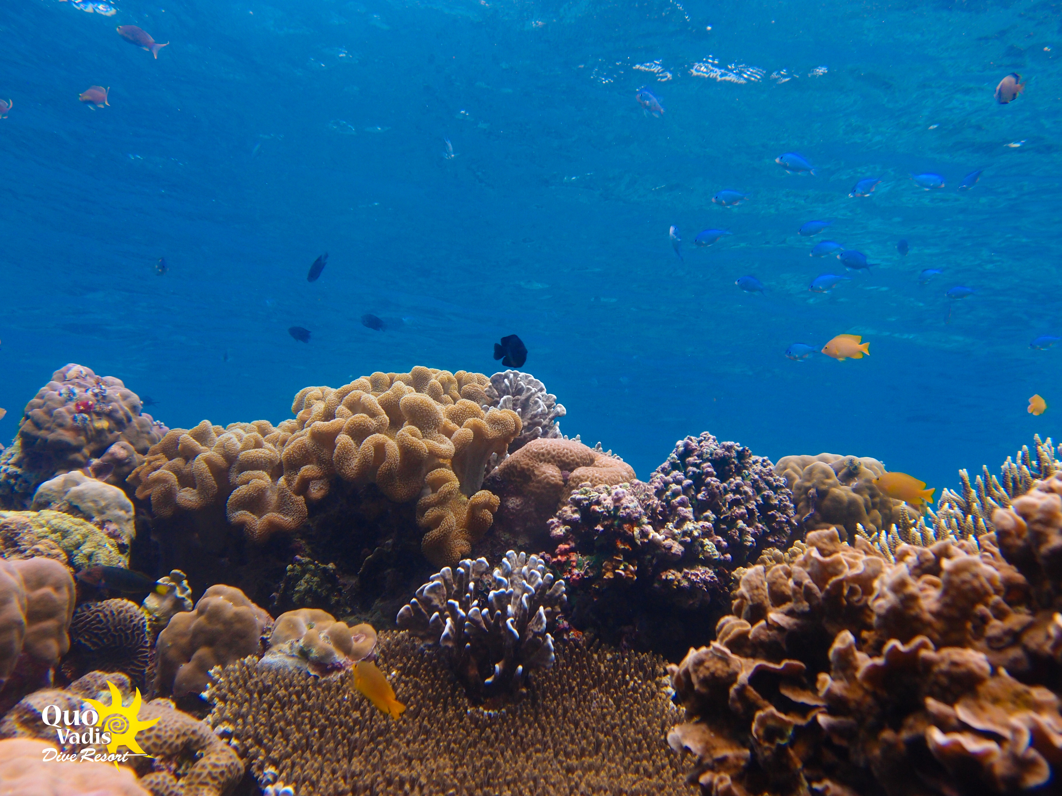 Coral garden - Top Pescador Island